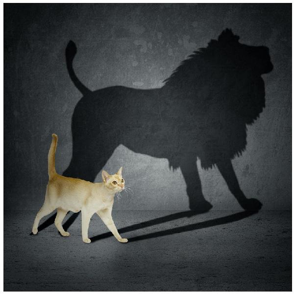 aslan olmak isteyen kedi